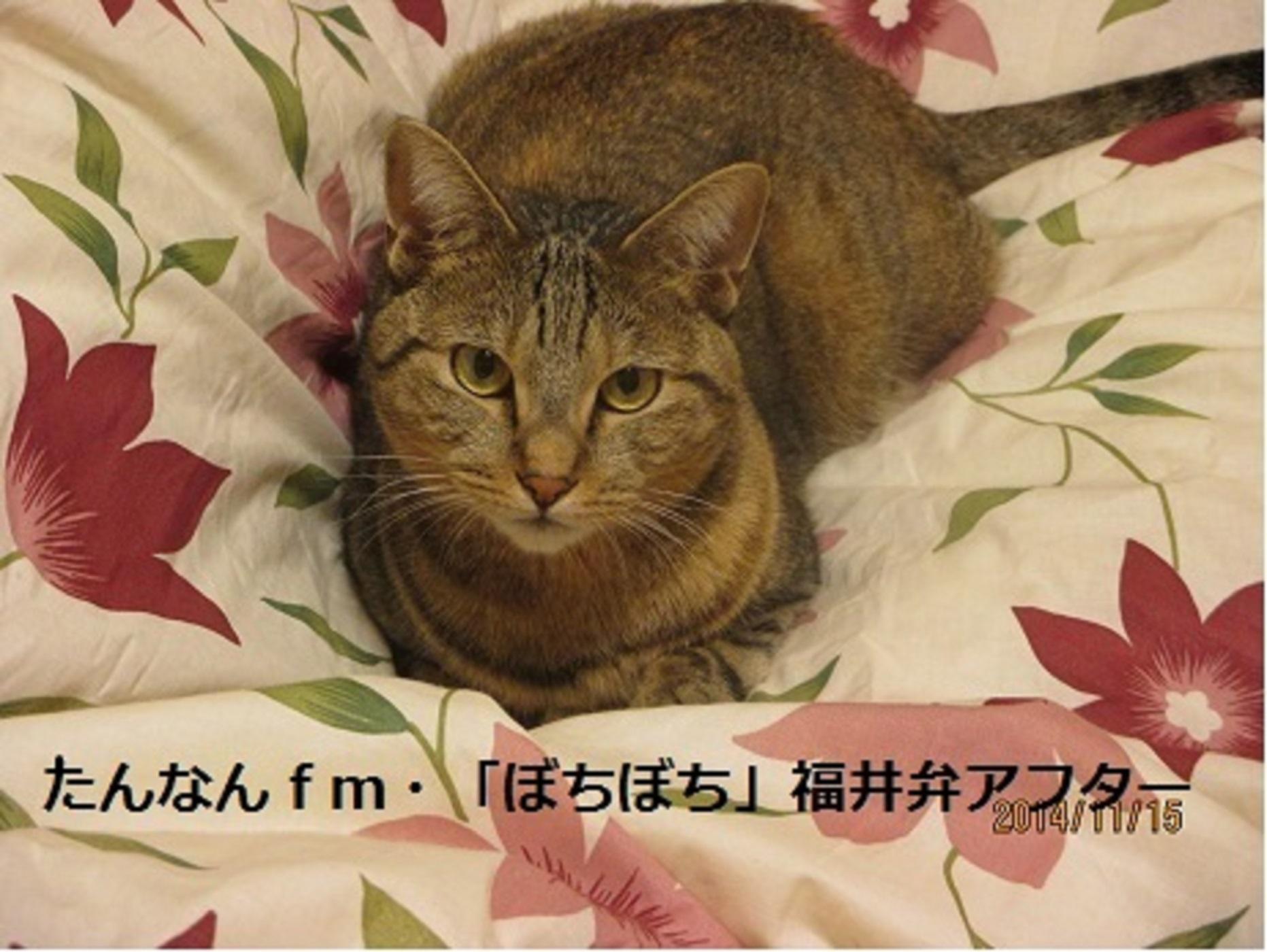 たんなんfm ぼちぼち 福井弁アフター